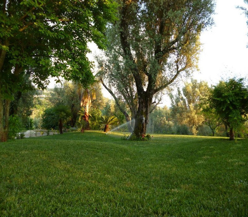 giardino con ulivi