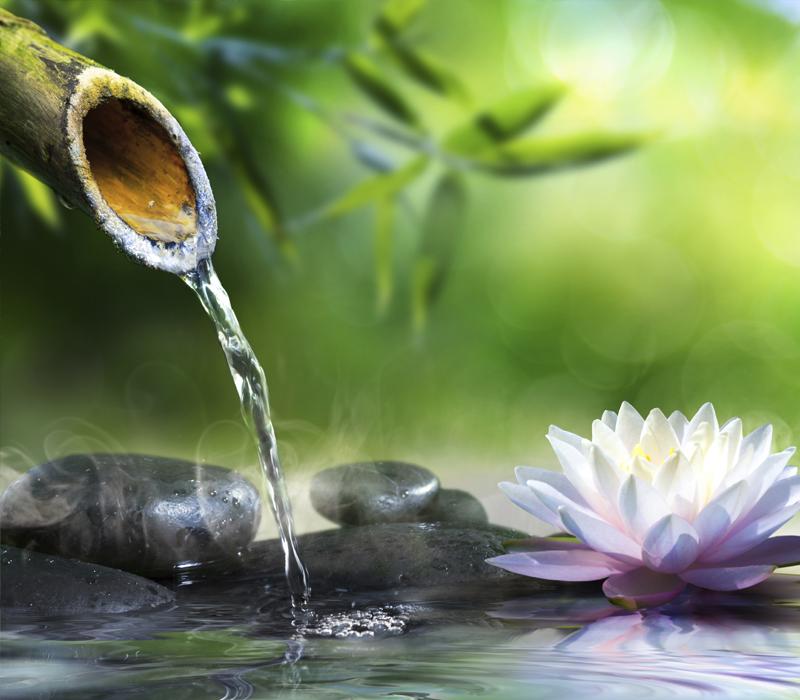 Giardino Zen Bonseki : Gaiazen gaia la multiservizi dal pollice verde