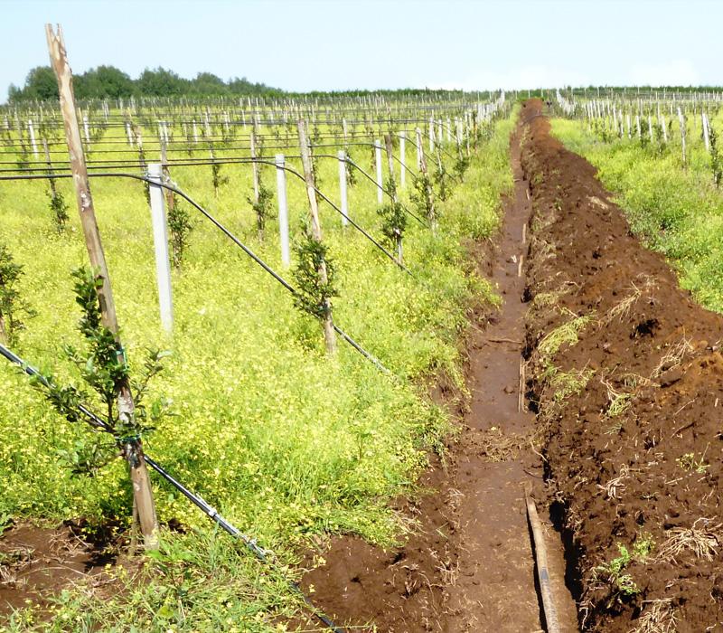 Scavo per impianto di irrigazione meleto