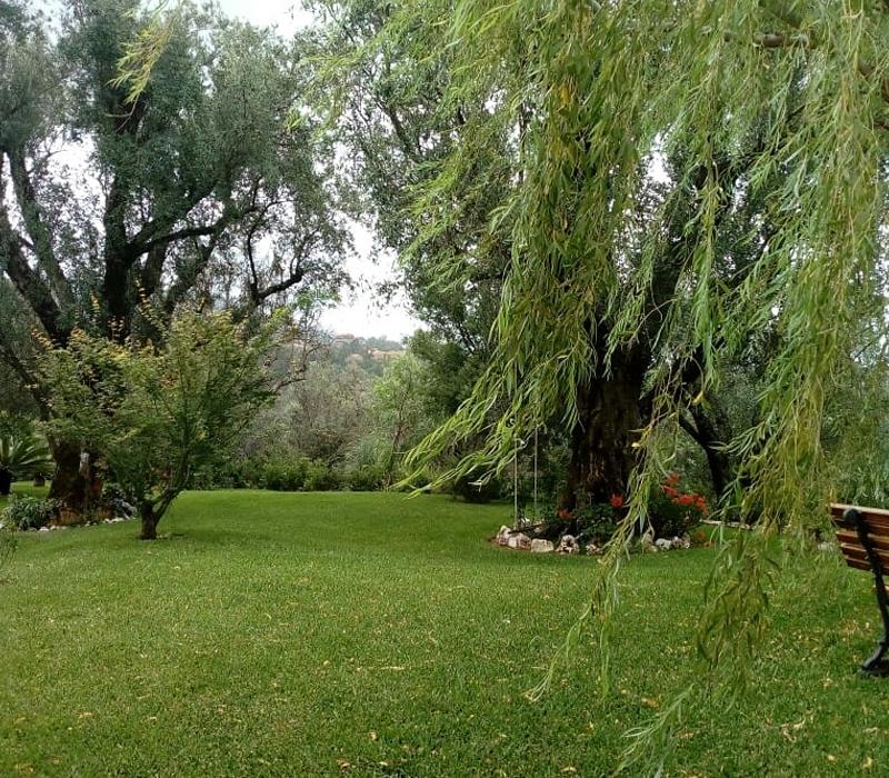 giardino-ulivi